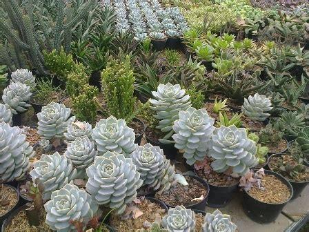 Pupuk Daun Bunga Hias tanaman hias indonesia tanaman hias kaktus tanaman hias