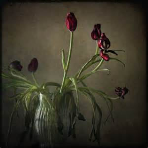 Nautical Vase Still Life Fine Art Photography Nature Red Tulips Oxblood