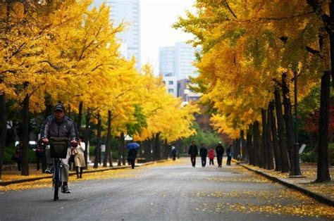 best japanese cities to visit osaka the best cities to visit in japan