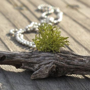 Growing Jewelry Eco Friendly Or Pointless by Shop Earth Necklace On Wanelo