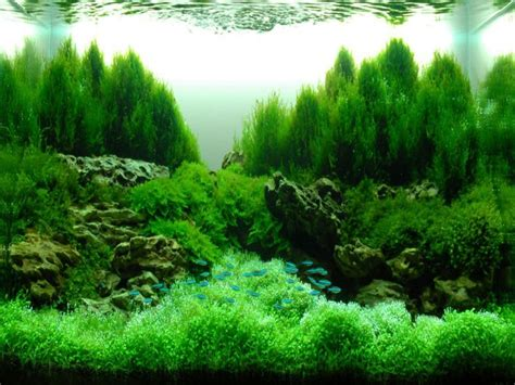 saltwater aquarium aquascape designs 13 best images about aquascape hardscape aquarium on