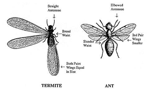 absecon island pest control exterminators nj