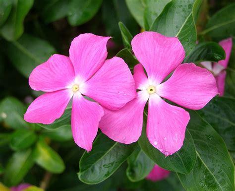 imagenes flores simples flores para jardim simples e pequeno decorando casas