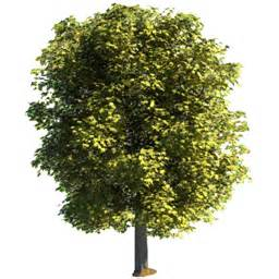 tree image tree 3d image rocketdock com
