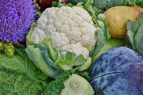 Cauliflower Fresh free stock photo of cauliflower food fresh