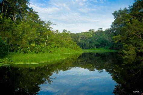 por una gentil floresta 8426374646 selva amaz 243 nica 191 los humanos la hacen m 225 s inflamable