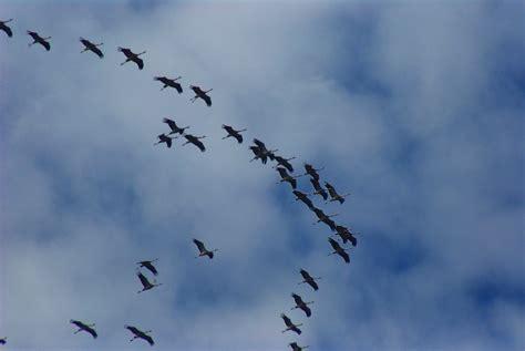 how birds prepare to migrate the infinite spider