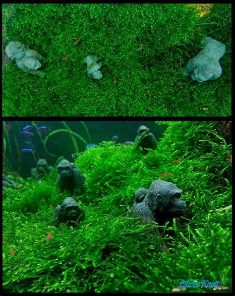 oliver knott aquascaping 78 best images about tank aquascape on pinterest fish