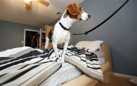 nj exterminators  dogs  sniff  growing bedbug