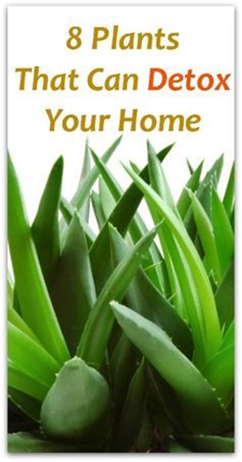 Detox Your Home Sustainability by 612 Best Horticulture Sustainability Images On