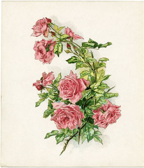 free vintage image branch of pink roses old design shop blog