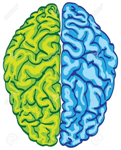 brain clipart brain clipart clipartion
