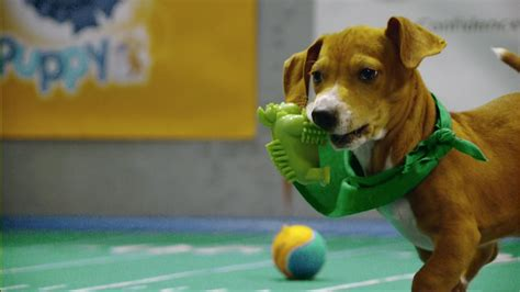 puppy bowl 2017 highlights puppy bowl xiii highlights puppy bowl animal planet