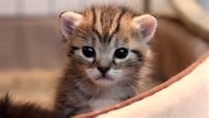 cute 2 3 week old kitten with slight head tremor youtube