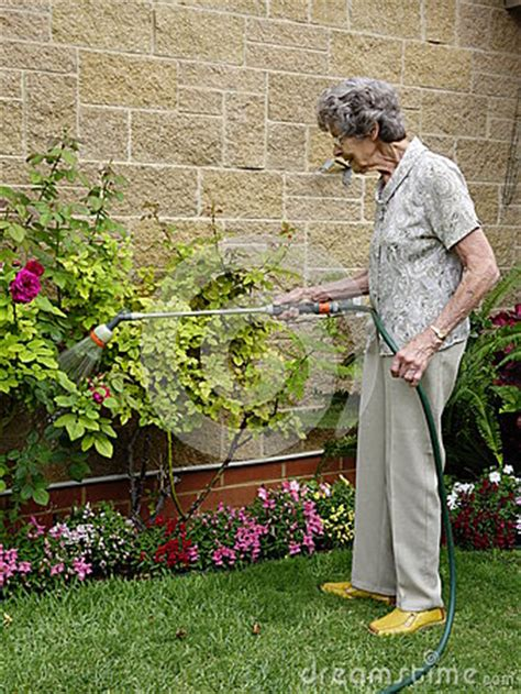 watering  garden royalty  stock images image