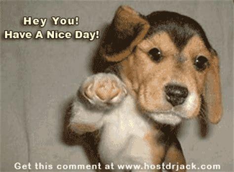 dachshund gif find  gifer