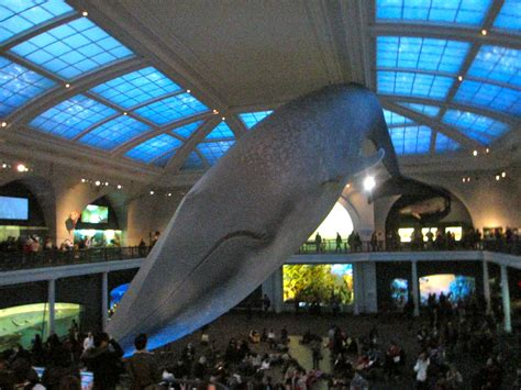 New Home Decorating Tips milstein hall of ocean life american museum of natural
