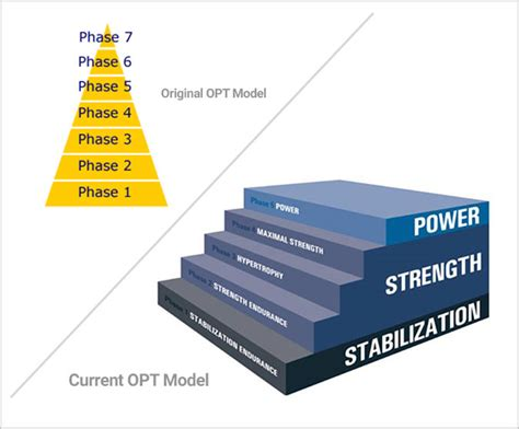 opt model template nasm 30 years of fitness industry leadership nasm