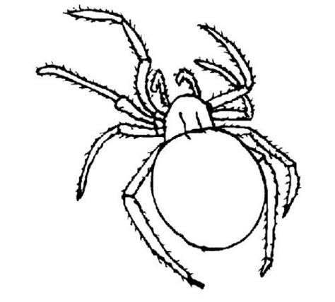 funny spider coloring page cartoon spiders coloring page cute spider pinterest