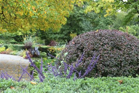 Bush Garden Ta by Color Theory 10 Plant Combinations For Autumn
