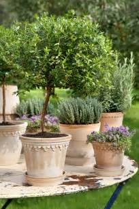 Outdoor Potted Trees 25 Best Ideas About Italian Garden On Italian