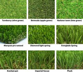 different kinds of grass