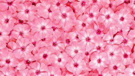 Vs Pink Flower umgeben herrlichen blumen wallpaper 14 1920x1080 wallpaper herunterladen umgeben