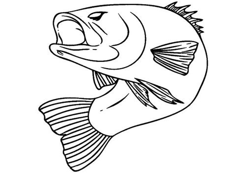 striped bass coloring pages