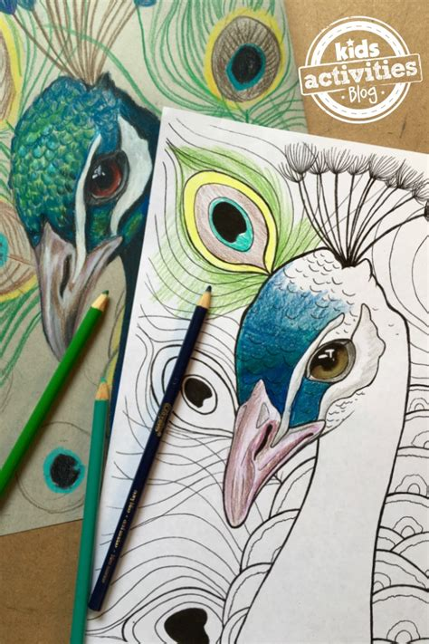 peacock coloring pages  kids kids activities
