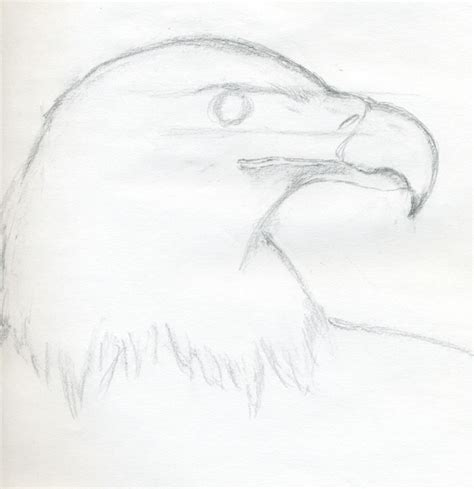 easy sketches how to draw a bald eagle jus 4 kidz