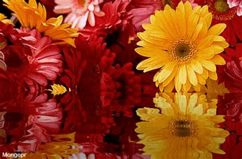 bellas flores amarillas y rojas mandarsaludoscom flores amarillas y rojas mandarsaludos com