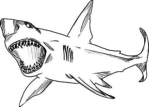 drawn shark coloring page pencil and in color drawn