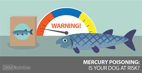 mercury poisoning  dog treats