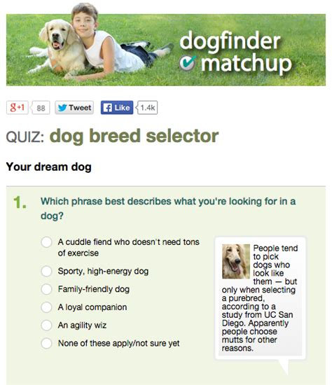 akc puppy test 8 breed selector tools for find your