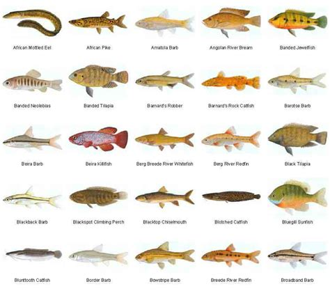 freshwater fish images freshwater fish fresh water fish species what is your favorite animal pinterest
