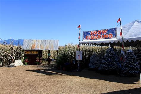 28 best christmas tree farm yucaipa live oak canyon