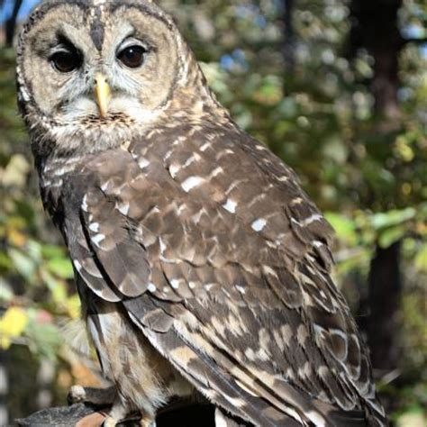 oak mountain s alabama wildlife rehabilitation center