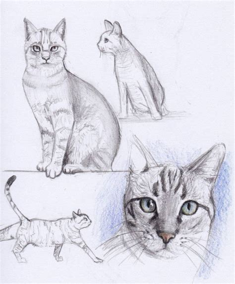 Sketches Exles by 40 Simple Cat Drawing Exles Anyone Can Try