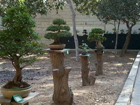 repurposed stumpstrunk  monkey poles bonsai garden