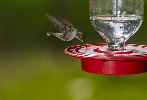 Bird Feeders Houston Bird Feeders Houston 28 Images Guide To Attracting
