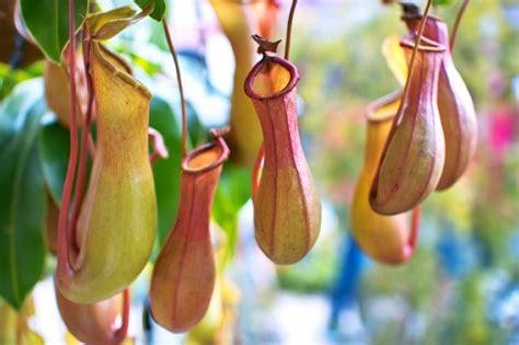 unusual houseplants unusual plants slideshow