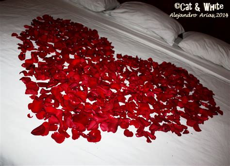 bed of roses bed of roses 01 by cat n white on deviantart