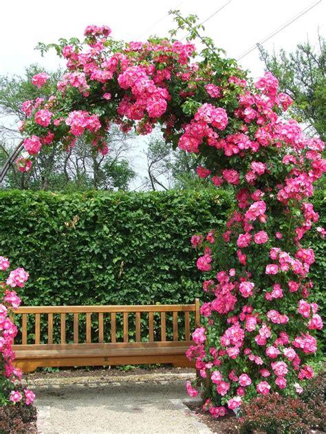 Garden Flower Arch Best 25 Garden Archway Ideas On Garden Arches Garden Arbours And Trellis