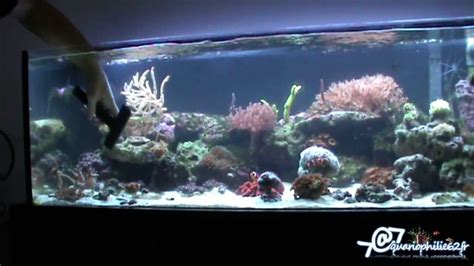 entretien nettoyage d un aquarium r 233 cifal marin ou eau de mer