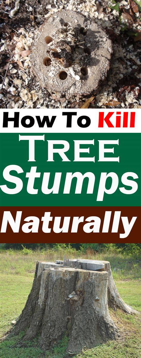 how to kill a bush how to kill tree stumps naturally removing tree stump