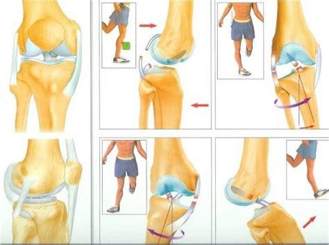 tiroir du genou les ruptures du ligament crois 201 anterieur avant