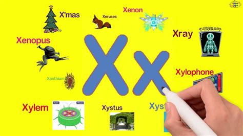 5 letter words with x words starting with x