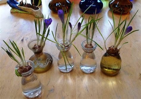 Crocus Bulb Vase by Crocus Garden Withindoors
