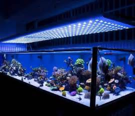 fish aquarium lights 18 amazing led lighting ideas for your next project