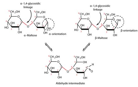 difference b w hydration and hydrolysis 14 6 disaccharides chemistry libretexts